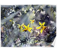 Daffodils of Hope Poster