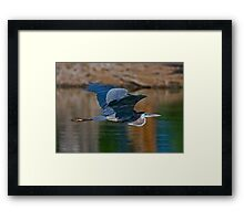 Great Blue Heron 11 Framed Print