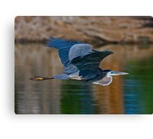 Great Blue Heron 11 Canvas Print