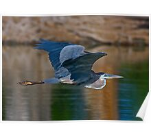 Great Blue Heron 11 Poster