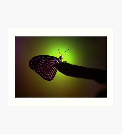 Butterfly Highlight Art Print