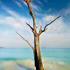 Cinnamon Bay Tree by Nathan Lovas Photography