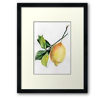 Branch of  lemons with leaves Framed Print