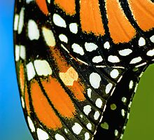 Monarch Detail by Nathan Lovas Photography