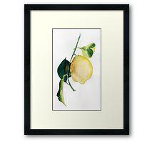 Branch of  lemons with leaves Framed Print