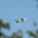 In Flight by Virginia N. Fred