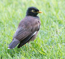 Mynah Bird Heaven by Bryan Shane