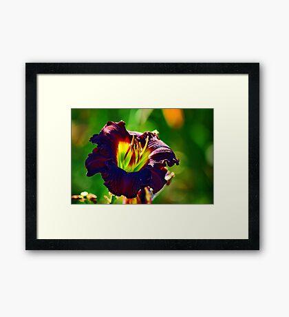 Lamp Shade Framed Print