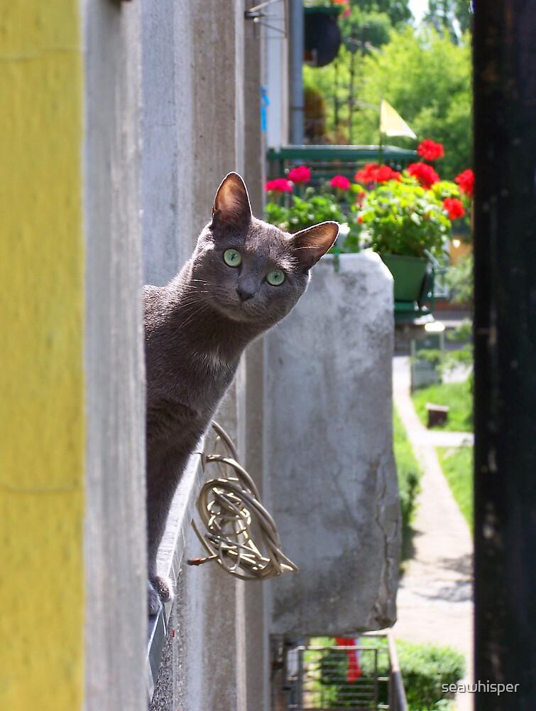 Photo...? by seawhisper