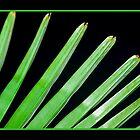 i love my palm tree by Ana GR