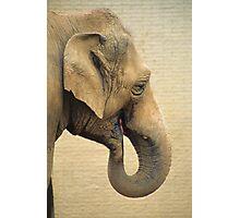 Elephant Profile Photographic Print