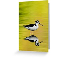 Black-Necked Stilt Greeting Card