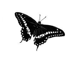 Butterfly In Pen & Ink by Ken Norris
