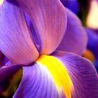 Irises - III by ctheworld