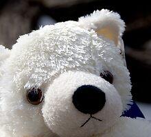 Little Bear by KDPhotos