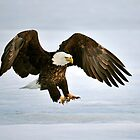 Ice Eagle by Nathan Lovas Photography