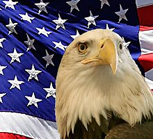 American Bald Eagle and Flag by sandyspider