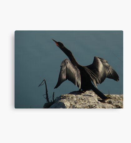 Wings of the Anhinga Canvas Print