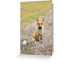 Red Fox In Wildflowers Greeting Card