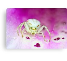 Knit one, pearl two Canvas Print