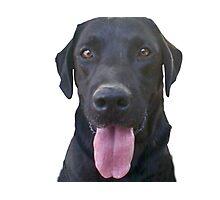 dogs, cartoon Photographic Print