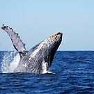 Humpback Whale by LjMaxx