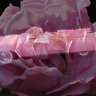 Pink Cadillac Rose by Donna Adamski
