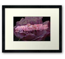 Pink Cadillac Rose Framed Print