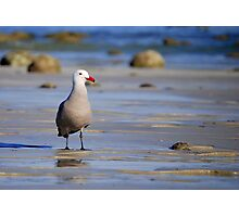 A Bad Company Gull Photographic Print