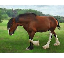 Shire Horse Mare Photographic Print