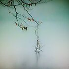 Winter Branches by smoothstones