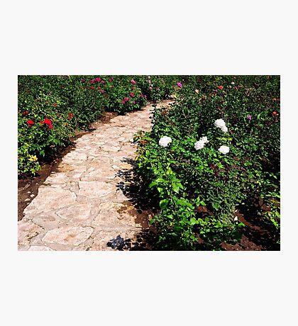 Rose Garden Photographic Print