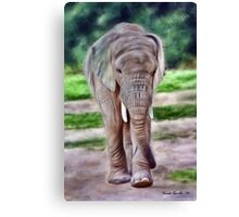 Portrait of a baby elephant, II Canvas Print