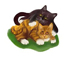 Another Tussle between Two Kittens Photographic Print