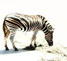 Zebra by Stephen Mitchell
