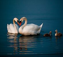 Swan Heart by Theodore Black