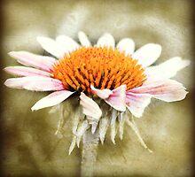 New Petals  by BarnArtandMore