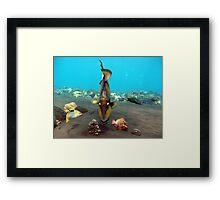 Trigger Fish Tulumben Bay Framed Print