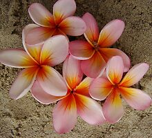 Beach Frangipani Fruits by Martice
