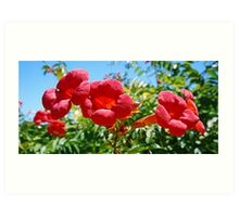 Splash of Red - Bignonia Art Print