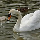 Swan and Baby by AnnDixon