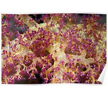 soft coral Poster