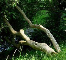 Woodland by sleza69