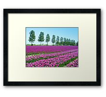 Purple Tulipfield Framed Print