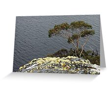 Snow Gum - Glacier Rock, Dove Lake, Cradle Mountain National Park, Tasmania Greeting Card