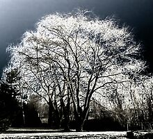Winter Trees by Maria Schlossberg
