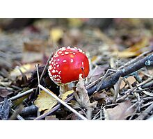 Red Cap Photographic Print