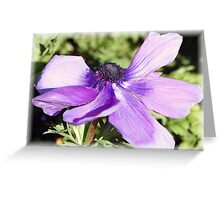 Popping Purple Poppy: Greeting Card
