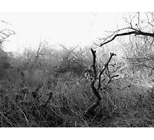 Desolate Waste Photographic Print