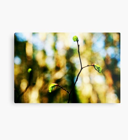 Full of life 6 Metal Print
